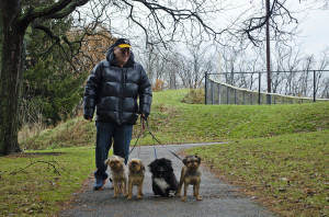 A man walks his dogs through Frick Park.  Photo by Alyssa Kramer